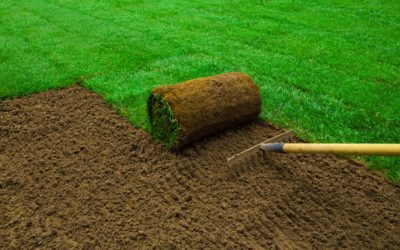 Sod or Grass Seed For Your New Lawn? View All The Pro's and Con's For Installing Sod…