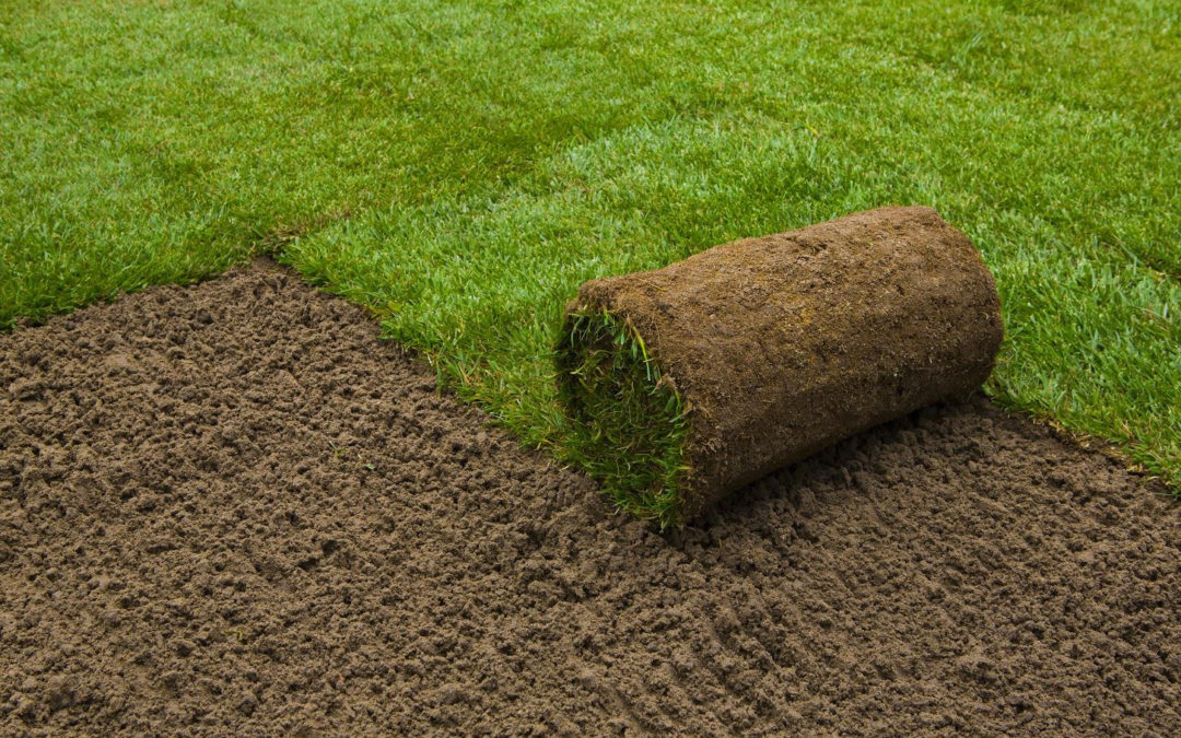 Lawn Tips – The 6 Benefits of Having a Sodded Lawn…